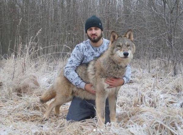 شاهد: شاب روسي ينشئ حديقة حيوان للذئاب