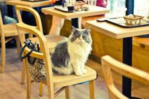 للمرة الأولى.. دبي تفتتح مقهى للقطط وتأمل بتأمين منازل للإيواء