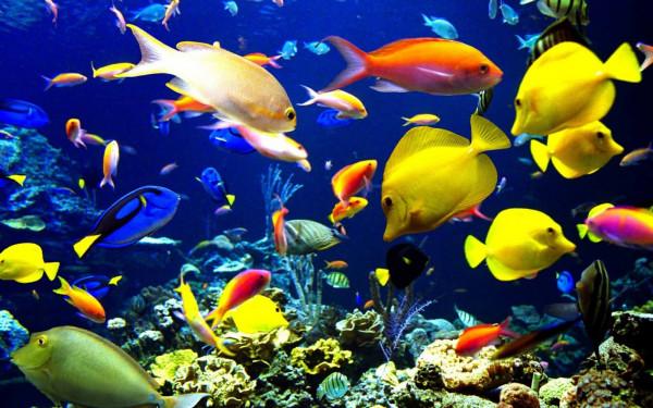 شاهد: ظهور سمكة غريبة تثير دهشة السكان