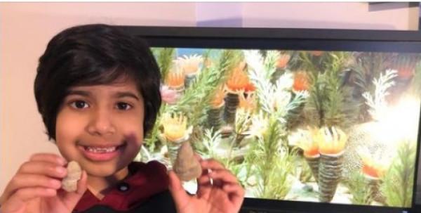 شاهد: طفل يكتشف حفريات تعود إلى نحو 500 مليون عام