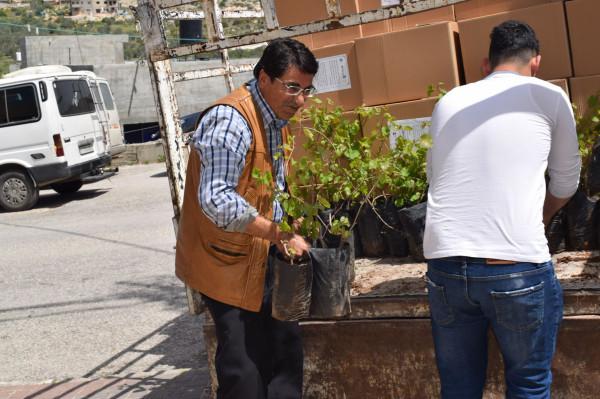الإغاثة الزراعية تنفذ حملة توزيع وزراعة اشتال في بلدة بروقين بمحافظة سلفيت