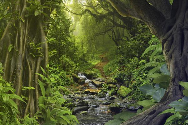شاهد: علماء في غابات الأمزون يكتشفون حيوان جديد