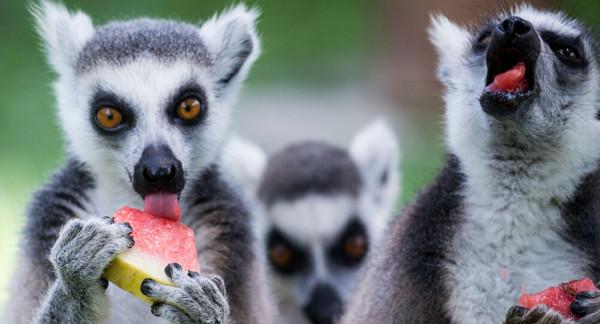 شاهد: حيوان بثلاثة عيون يثير ذهول الجميع