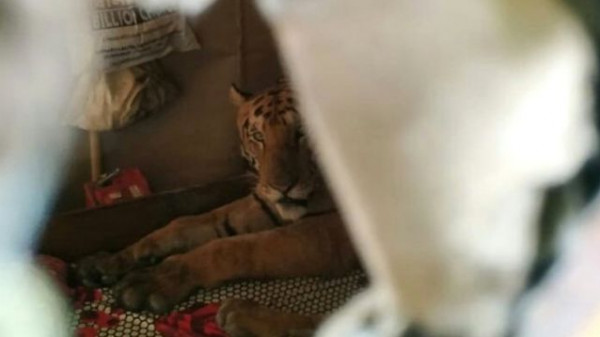 شاهد: حيوان مخيف و غريب يرعب فتاة بداخل منزلها