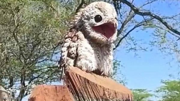 """شاهد: امرأة توثق ظهور الطائر """"الشبح"""" في كولومبيا"""