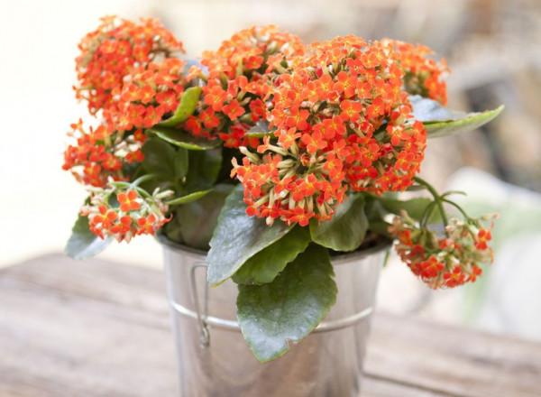 تعرف على أجمل 10 نباتات زينة داخلية للبيت