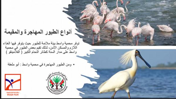 """""""ناشئة الشارقة"""" في جولة افتراضية مع الطيور في سماء الإمارات"""
