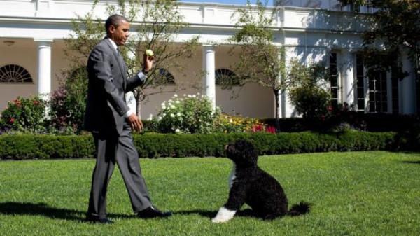 """""""لقد كان بالضبط ما كنا بحاجة إليه"""".. شاهد كيف نعى أوباما كلبه"""