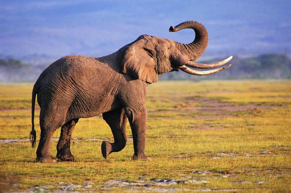 الأدهش على الإطلاق.. فيل يرفع دعوى على حديقة حيوان