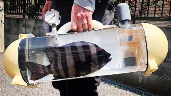 شركة يابانية تطور حقيبة متنقلة للتنزه بالأسماك