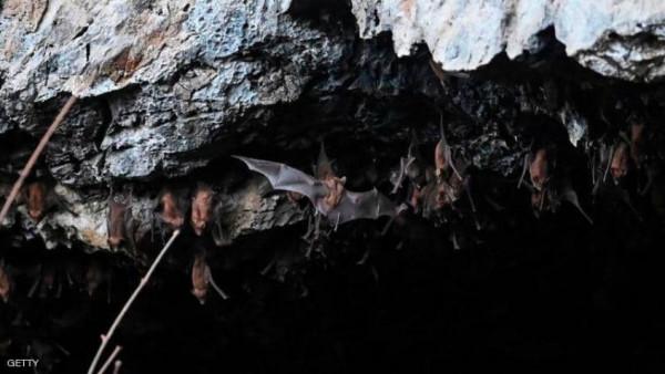صدمة جديدة.. (كورونا) حديثة في الخفافيش قد تصيب البشر
