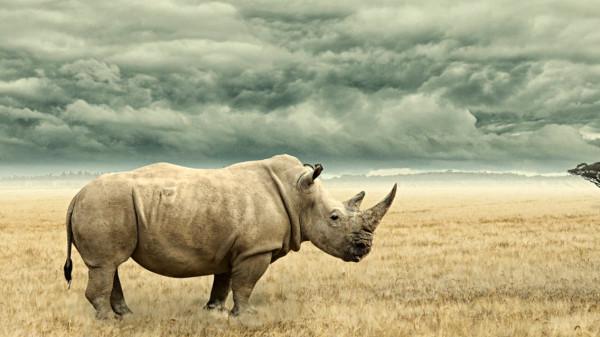 شاهد: حديقة حيوان بفلوريدا تعلن ولادة أنثى وحيد قرن