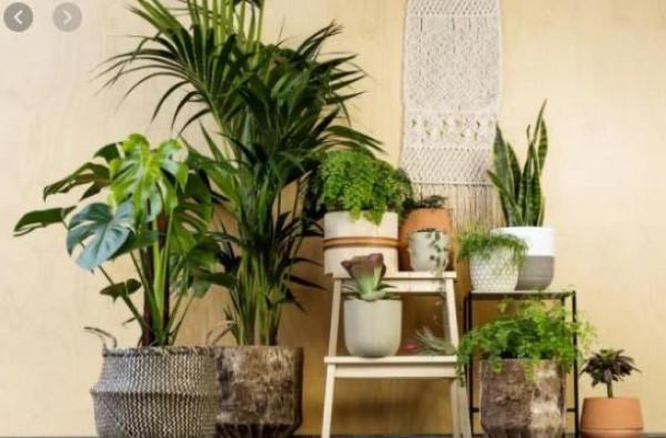 شاهد: نبات منزلي يباع بـ19 ألف دولار في هذه الدولة