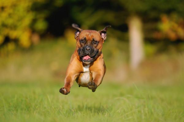شاهد: كلب مخلص يثير العواطف والدهشة بعد مرافقة مالكته المريضة