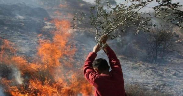 مستوطنون يضرمون النيران بمقاعد بأراضٍ في بيت لحم