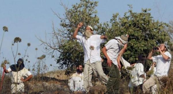 مستوطنون يعتدون على المشاركين بمسيرة منددة بإنشاء بؤرة استيطانية شرق طوباس