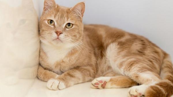حكم قاسي ضد بريطاني قتل 9 قطط.. بالتفاصيل