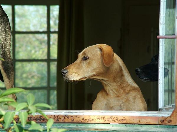 كلب وفي يراقب سارق ويصل لمنزله ويفضحه.. ويحظى بهذه المفاجأة