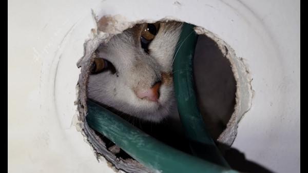 بالفيديو.. إنقاذ قطة عالقة في داخل عمود إنارة