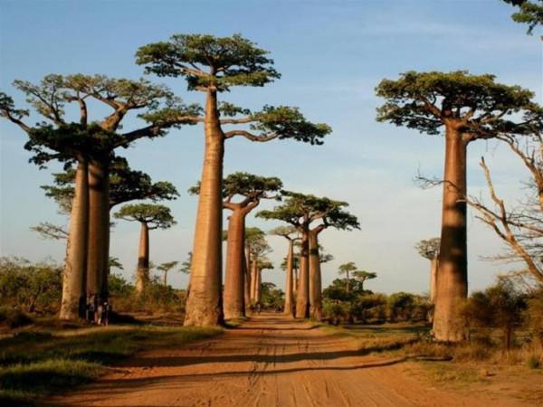 تعرف على أشجار بأشكال غريبة في الطبيعة