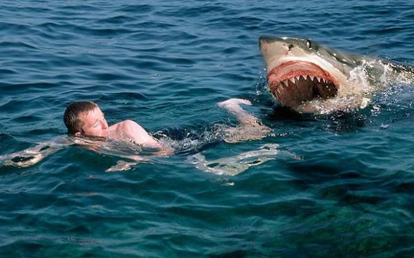 شاهد: مقطع جنوني لشابين يقفزان فوق سمكة القرش