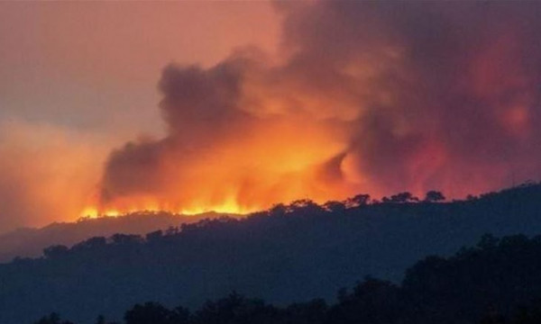 الجزائر توقف 16 شخصًا للاشتباه في تورطهم بحرائق الغابات