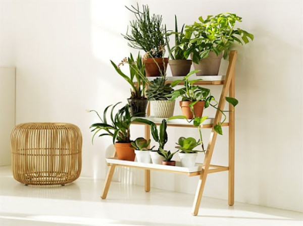 أفكار لتنسيق النباتات الداخلية في المنزل