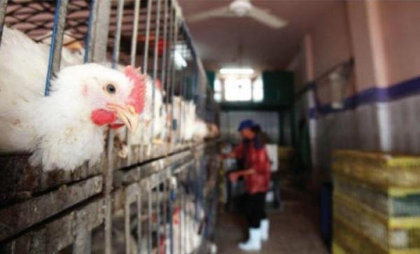 ارتفاع على أسعار الدجاج والبيض في أسواق غزة