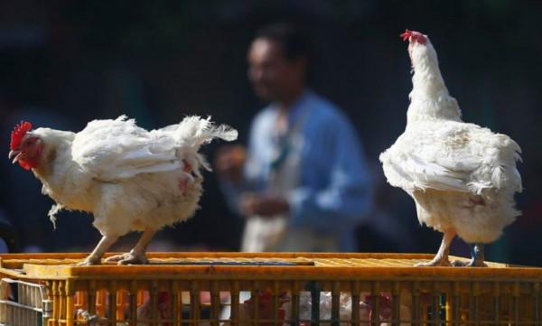 مجددًا.. ارتفاع أسعار الدجاج والطماطم في أسواق غزة