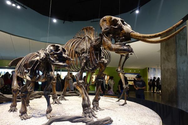 طفل يعثر على حفرية حيوان منقرض منذ 12 ألف عام