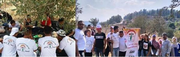 """المكتب الوطني يطلق حملة """"حماة الأرض"""" لمساندة المزارعين في موسم قطف الزيتون"""