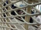 الجالية الفلسطينية بمدينة زيغن الالمانية تنظم مظاهرة تضامنية مع الاسرى