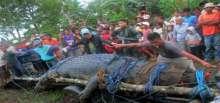 الامساك بتمساح عملاق في الفلبين
