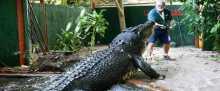 أصبحا صديقين... ثمانيني يعيش مع تمساح يزن طناً منذ 30 عاماً
