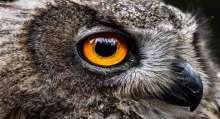 صور: أغرب عيون الحيوانات حول العالم