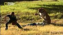 الصياد فريسه النمر الهندي