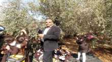 تربية قلقيلية تطلق حملة تطوعية لمساعدة الفلاحين في قطف الزيتون