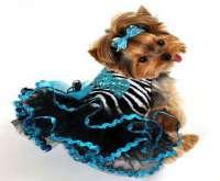 بالصور.. عروض سنوية لأزياء الكلاب المدللة على منصات الموضة العالمية
