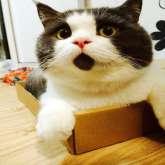 """بالصور: القط """"المندهش"""" يشعل مواقع التواصل بملامحه الطريفة"""