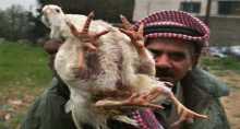 دجاجه بأربعة أرجل تثير الجدل في بلدة السيلة الحارثية غرب جنين