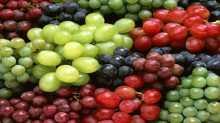 بحث علمي يكشف عن وجود 21 صنف أصيل من العنب في فلسطين دون سواها من دول العالم