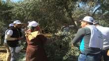 الإغاثة الزراعية تشارك المزارعين قطف زيتونهم في قطاع غزة