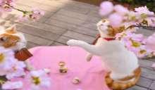 قطان يعملان في السياحة في اليابان