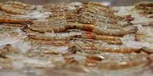 سوق السمك بأبوظبي