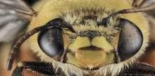 الحشرات كما لم تراها من قبل