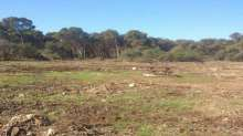 جمعية بييزاج : اجثتات غابة بوسكورة يتناقض مع القانون الاطار 99.12حول البيئة والتنمية المستدامة