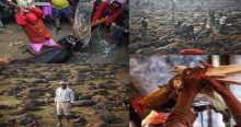 """""""داعشية"""" نيبال تقطع رؤوس ربع مليون حيوان بيومين"""