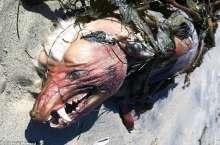 بالصور: مخلوق متوحّش يثير حيرة سكان كاليفورنيا