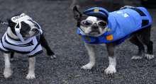 كلاب الهالووين