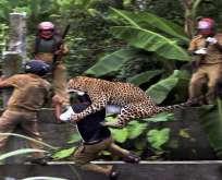 فهد يهاجم حراس الغابة في الهند